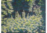 24 - Waldlichtung - 80x60 - © 2010 by H. W. Thurmann